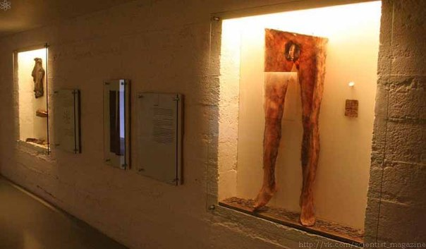 В исландском музее колдовства и магии на обозрение выставлены так называемые некроштаны, изготовленные из содранной