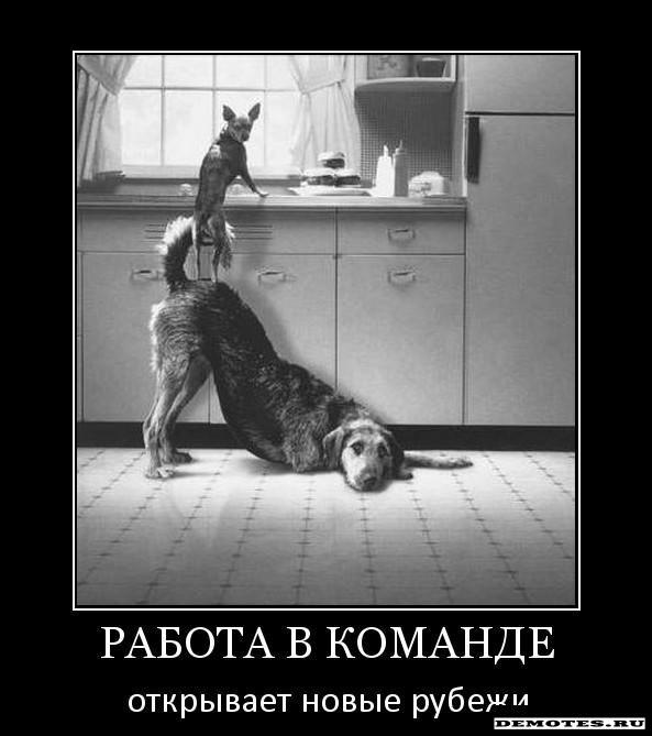 КОМАНДА!