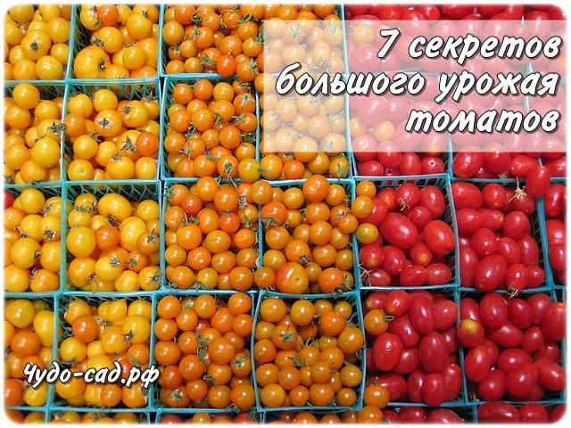 7 правил большого урожая томатов