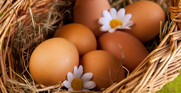 Белые и коричневые яйца ничем не отличаются по вкусовым и питательным свойствам, а также по прочности скорлупы