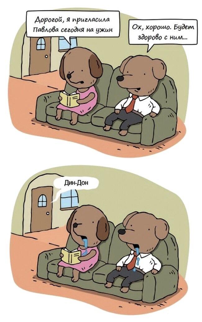 Собачки Павлова :-)