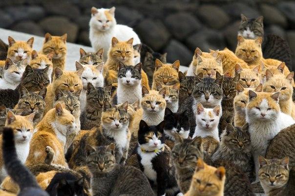 На Японском острове Аосима живет 120 котов, что в шесть раз больше, чем людей.
