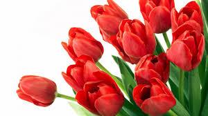 Дорогие девушки! Поздравляю вас с чудесным весенним праздником! Желаю вам хорошего настроения, улыбок! Быть самыми