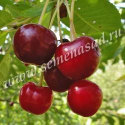 Сбор заказов - Агрoфиrма Пoиck - Богатый урожай и красивый сад! - Плодовые деревья - яблони, груши, сливы- и другие