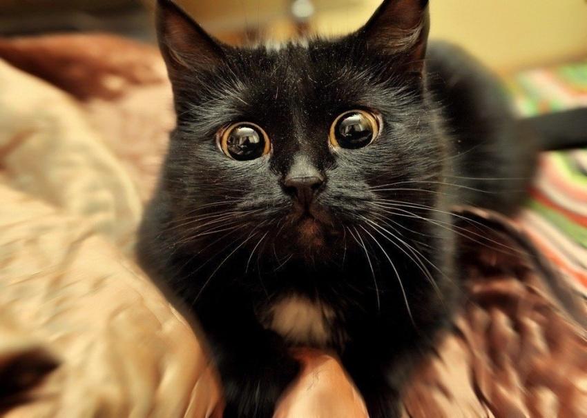 Ты жив?!? Ты что, не ел мои котлеты?