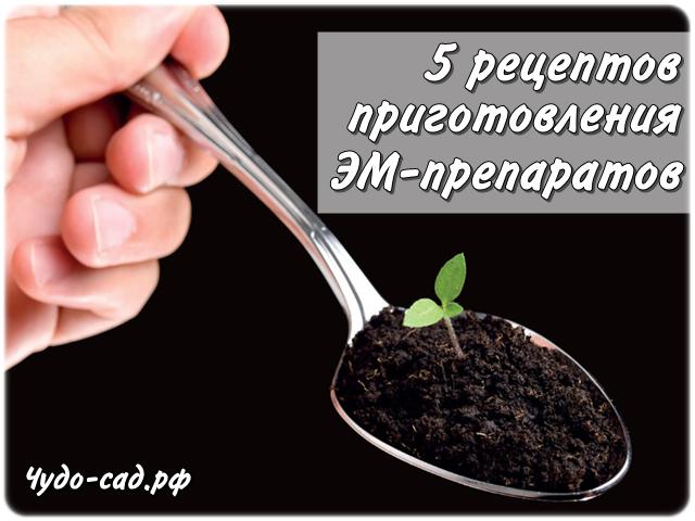 Как самостоятельно приготовить ЭМ-препараты: 5 простых рецептов