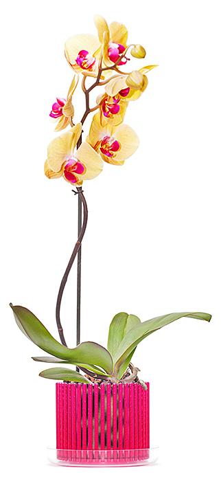 Сбор заказов. Чудесные горшки для орхидей, яркие кашпо. Качество просто восторг! Цветы скажут Вам Спасибо! Сбор - 2. Экспресс-сбор!