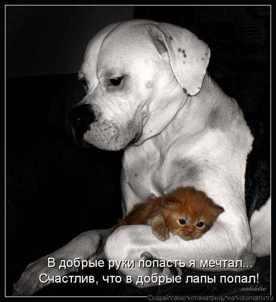Огромная псина и крошечка кошка..