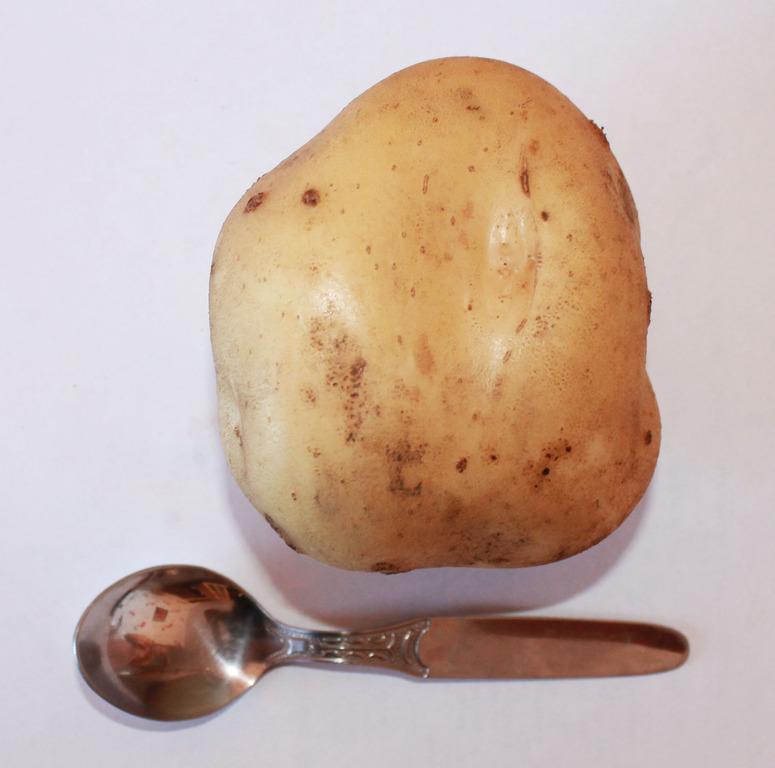 Семенной картофель и лук-севок. Выкуп 1.