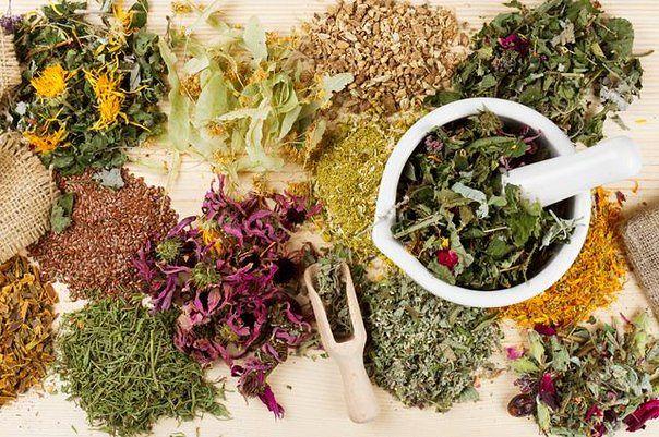 ВАЖНО ЗНАТЬ! Противопоказания лекарственных трав