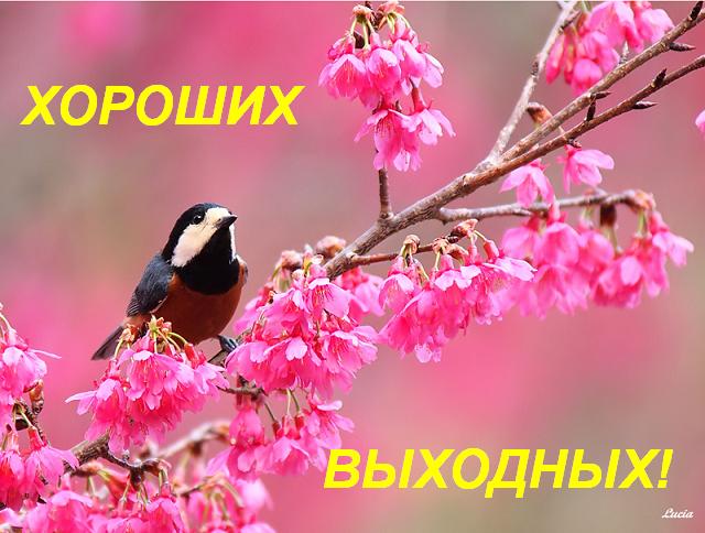 Нумерологический анализ дня: 24.4.2015