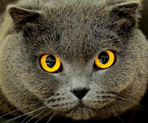 20 интересных и удивительных фактов о кошках!