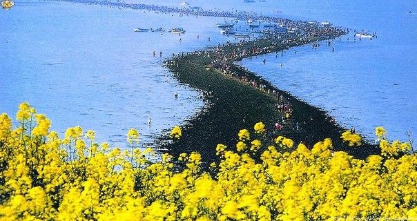 Раз в год между двумя островами южнокорейского уезда Чиндо расступается море, обнажая проход длиной 2 км и шириной 40 м.