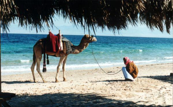 Российским туристам вновь придётся раскошелиться по покупку египетских виз