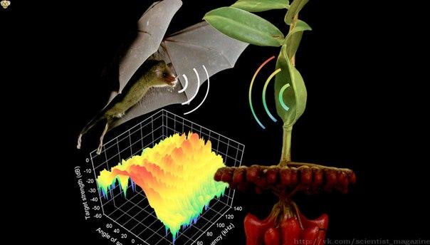 Некоторые летучие мыши питаются нектаром растений, которые используют это для своего опыления