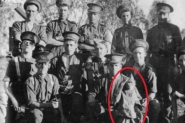 Капрал Джеки - история военного павиана