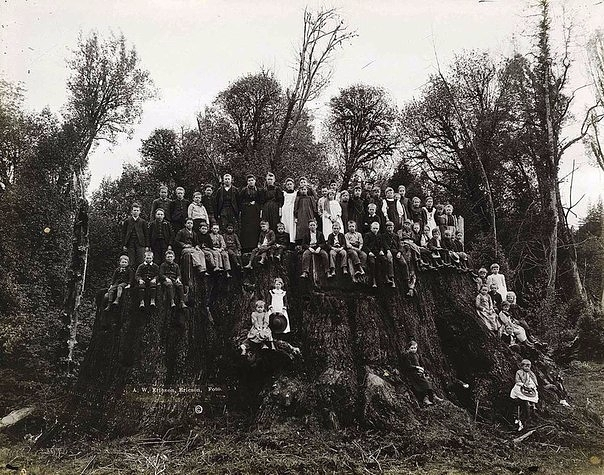 Филдбрукский пень, 1890е гг