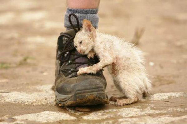 Красота не спасет мир. Ему поможет только доброта.