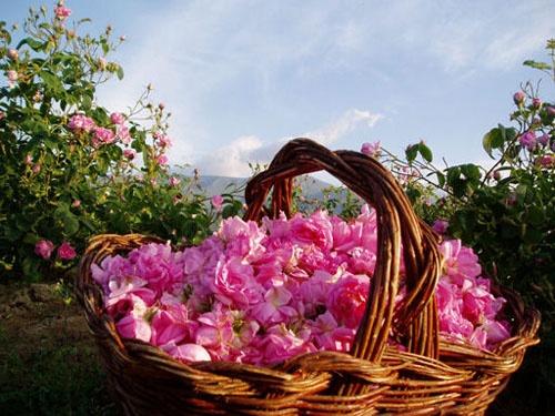 Сбор заказов. Золото природы для Вашей красоты. 100% натуральная косметика из сердца Болгарии на основе масел розы, лаванды, оливы. Распродажа продолжается, скидки от 50%-5