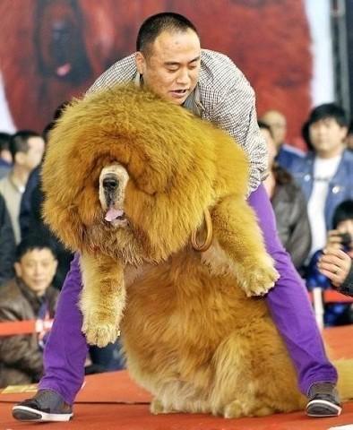 Самый дорогой собакен
