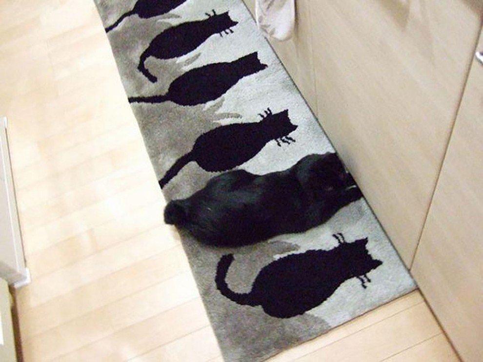 Мастерство кошачьей маскировки