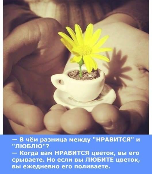 Любовь не терпит объяснений ей нужны поступки... (с) Эрих Мария Рэмарк