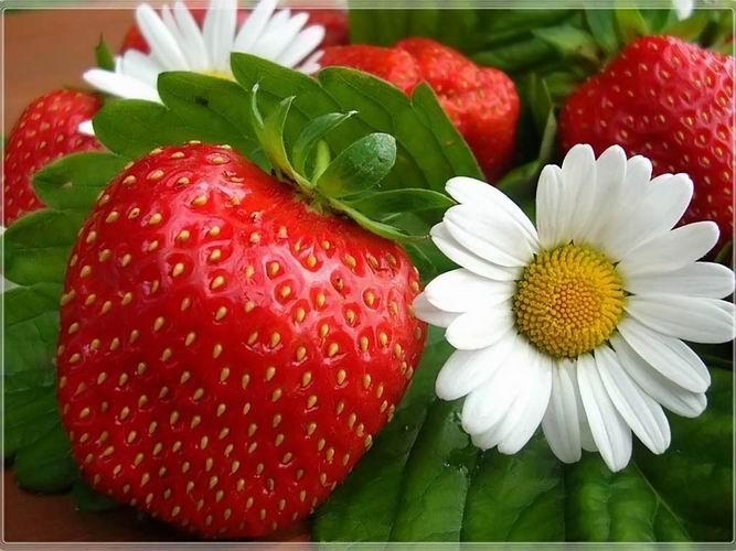 Самая любимая садовая вкусняшка-ЗЕМЛЯНИЧКА-2