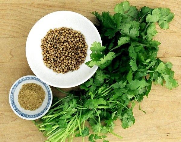 Кориандр, или кинза пряное овощное растение, известное многим