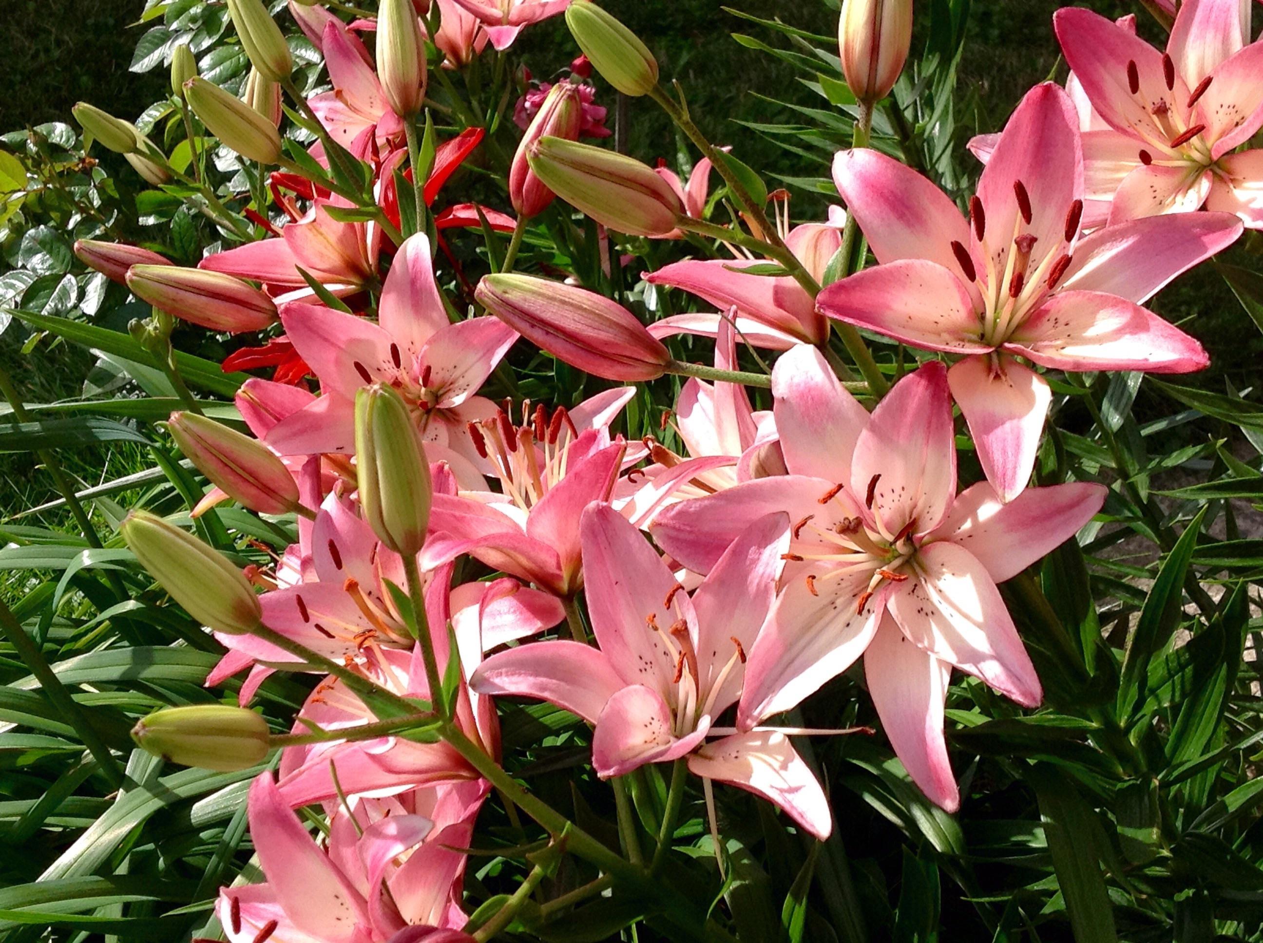 Цветы - осколки рая на Земле.