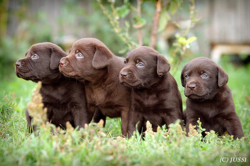 Умнейшие собачки - добрейшие существа...