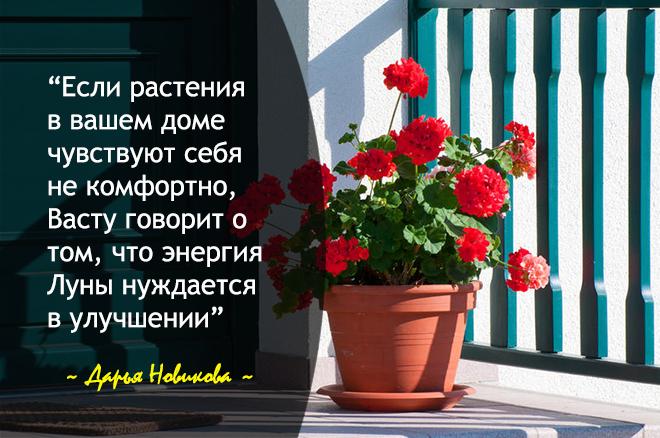 Цветы притягивают Луну в дом
