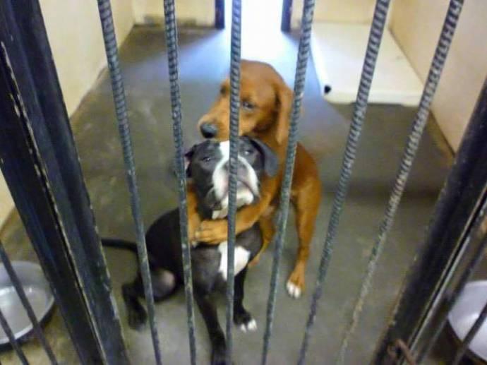 Блогеры спасли от усыпления обнимающихся собак