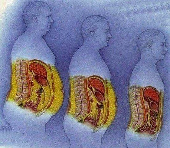 Почему растет живот