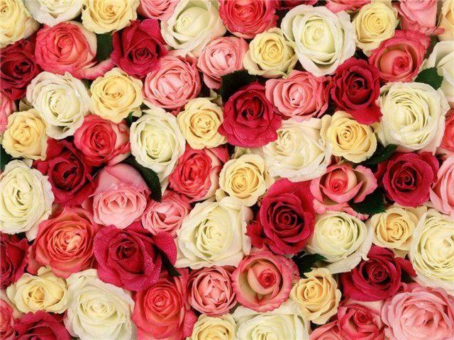 Закупка цветов и букетов к 1 сентября