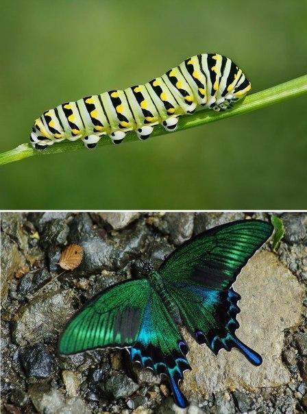 Серия фотографий, показывающая, что получается из страшных гусениц