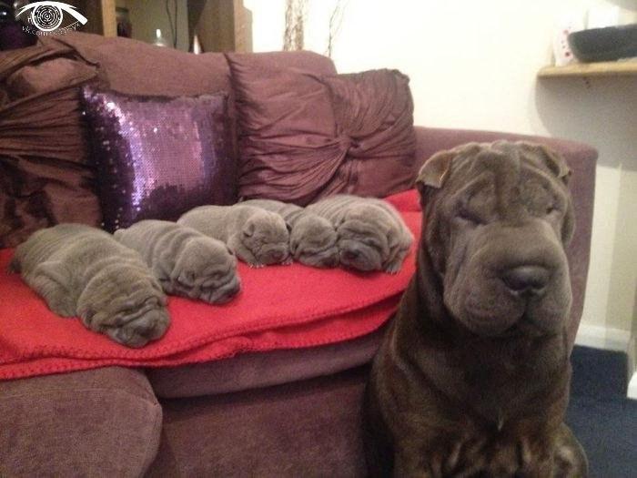 10 собак со своими щенками.
