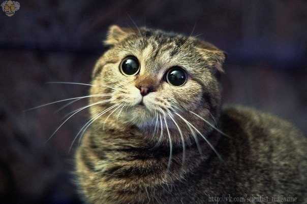 Человек весит, в среднем, в 20-30 раз больше кошки. И если в кошку кинуть тапком, это равносильно, что в человека кинуть креслом.
