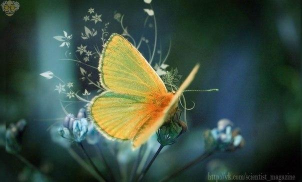 Бабочки не могут летать во время землетрясения.