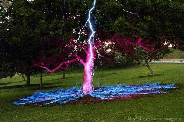 Молния ударяет в дерево. Спорная фотография на длинной выдержке.