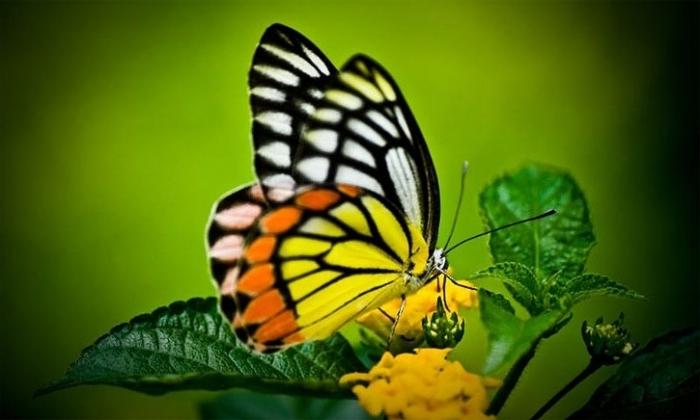 Ко мне сегодня бабочка в дом залетела... говорят, что это очень хорошая примета...