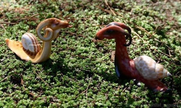 Самые необычные моллюски в мире - драконьи улитки, названные так из-за необычной формы головы