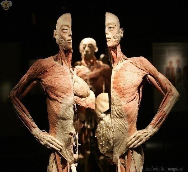 Рецепт человеческого тела