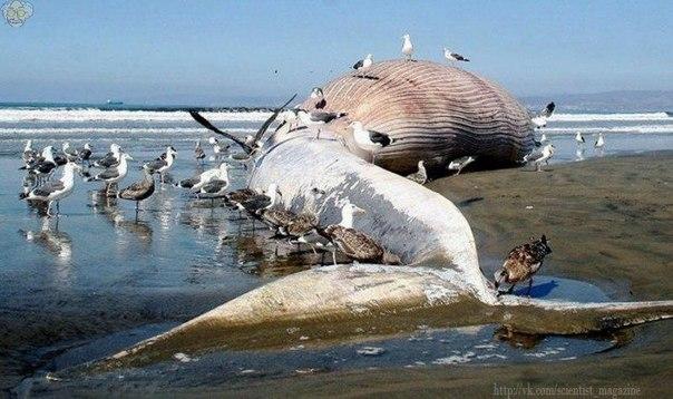 Согласно одной из Гипотез,около 50 млн лет назад киты имели четыре конечности и обитали не в воде,а ходили по земле.