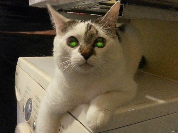 Кот зомби