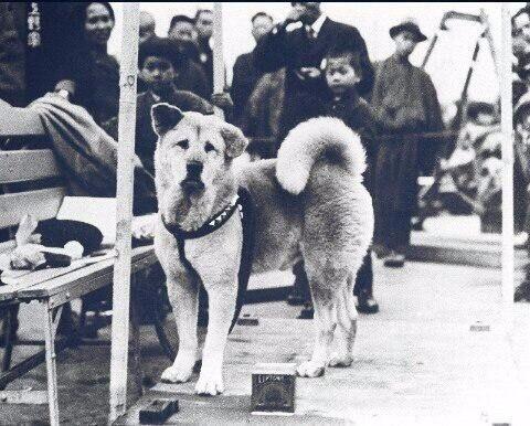 Фото Хатико. Все знают эту собаку, но мало кто видел это фото.