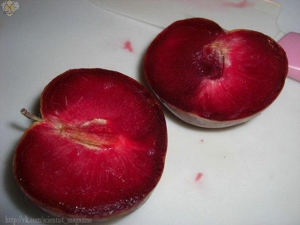 Плуот - гибрид сливы и абрикоса