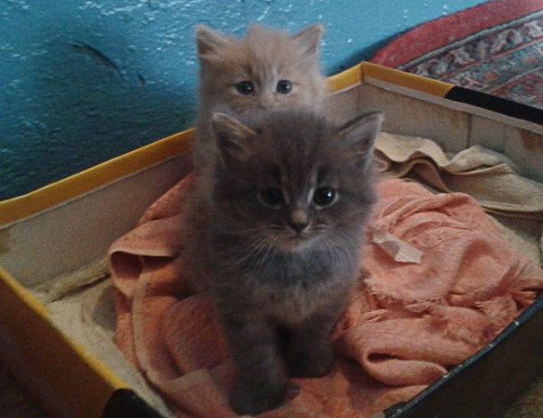 Очень хочется пристроить котят в добрые руки !!!!