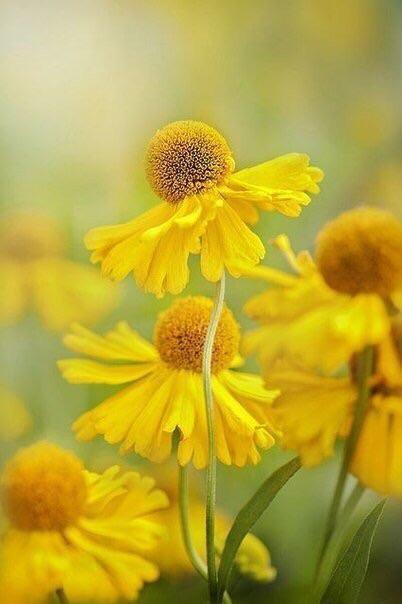 Экспресс-сбор. Комнатные и садовые растения от частного хозяйства САВГАРДЕН