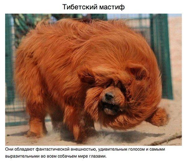 Животные, о которых вам не рассказывали