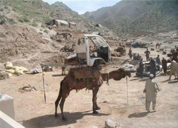 Тюнингованый верблюд